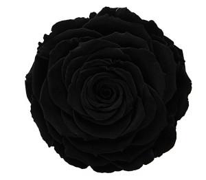 RR-BLACK