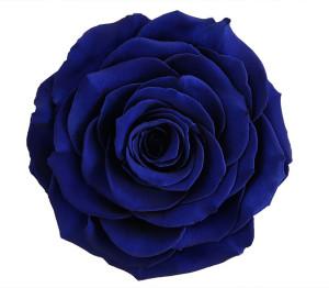 RR-ROYAL-BLUE