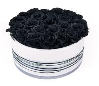 Black Sombrelitta