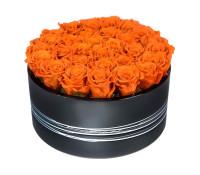 Deep Orange Sombrelitta