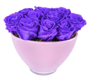 Violet Vain In Pink Vase